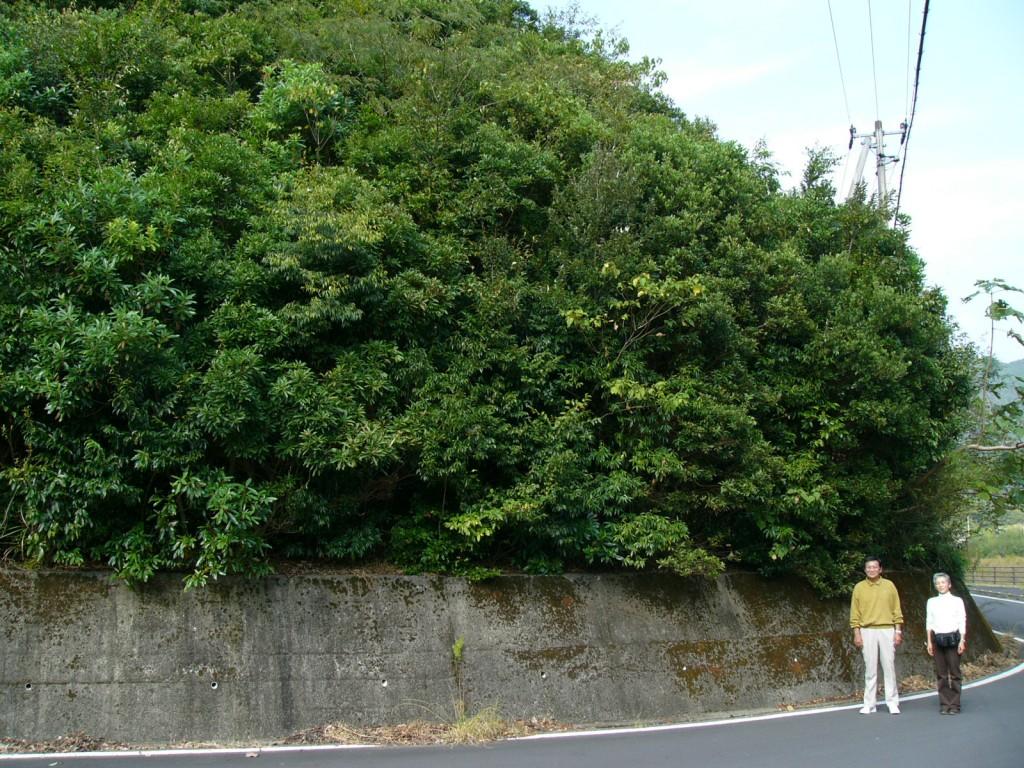 061104 (59)小学生が植えて10年経過した森