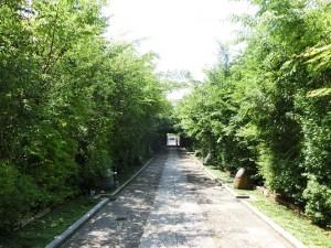 150721 (8)仙台輪王寺